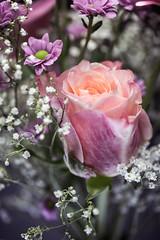 Flowers (janeway1973) Tags: schleierkraut babys breath rose pink rosa marguerite margerite macro makro closeup nahaufnahme
