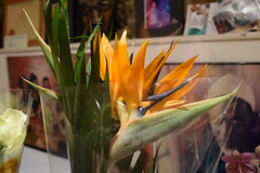 DSC_9386 Bird of Paradise flower from Columbia Road Sunday Flower Market Shoreditch London. (photographer695) Tags: bird paradise flower from columbia road sunday market shoreditch london strelitzia is genus five species perennial plants native south africa it belongs plant family strelitziaceae the named after duchy mecklenburgstrelitz birthplace queen charlotte united kingdom