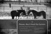 Horse, Danada Forest Preserve. 19 (EOS) (Mega-Magpie) Tags: canon eos 60d outdoors danada forest preserve wheaton dupage il illinois usa america horse equine bw black white mono monochrome vignetting