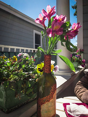 flowers (flrent) Tags: san jose little italy california cali bay area sf flower flowers bottle