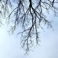 Dancing Branches in the Sky