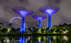 Gardens by the Bay, Singapore (rvk82) Tags: 2017 december december2017 garden gardens gardensbythebay greenery nikkor1424mm nikon nikond850 rvk rvkphotography raghukumar raghukumarphotography singapore wideangle wideangleimages rvkonlinecom rvkphotographycom sg