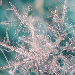 Snowflake Magic <3 (Rising Mist Photography) Tags: snowflake snow beautiful magic crystal oneofakind ice sony art naturesart