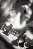 Romschack (Thomas Ohlsson Photography) Tags: chess leicam lund m42 mounta12 ricohgxr romschack supermulticoatedtakumar35mmf2 thomasohlssonphotography thomasohlssoncom