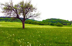 Field (PixelSky Photo (Mel M.)) Tags: tree alone greenery grass landscape nature trees mountainhill