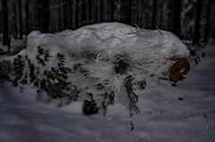 Raureif (Deutscher Wetterdienst (DWD)) Tags: winter eis ice raureif rime winterwunderwald winterwonderland