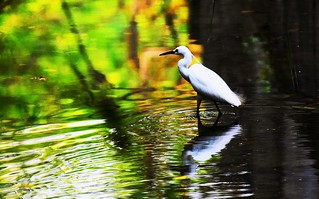 Egret toward a colorful world