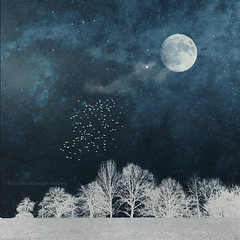 night in blue and  white (Dyrk.Wyst) Tags: night fantasy landscape moon birds surreal dreamy textures stars illustration