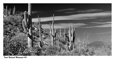 Tonto National Monument #2BW (gardnerphotos.com) Tags: tontonationalmonument tontobasin saguaro arizona gardnerphotoscom