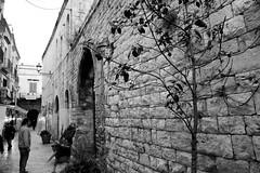 Strada de Carmine (Weingarten) Tags: italia italie italien italy puglia pouilles apulien apulia bari