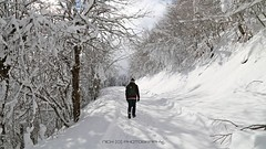 Certi giorni ... (_Nick Outdoor Photography_) Tags: img5710 passodelchiodo appennino forestadelmontepenna escursioneinvernale winterhiking canoneos6d beauty aftersnowfall magicoappennino