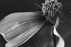 One-legged flower. (ogdaddyo) Tags: