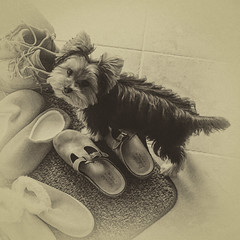 o'key, this is your footwear... and where is mine? (marinachi) Tags: puppy dog monochrome bw footwear grey somethingfortheweekend
