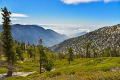 Folds (kirstenscamera) Tags: california outside westcoast angelesnationalforest mountains mist fog sky trees pine peak mountainrange sangabriels nikon d810 trail hike losangeles ca summit climb sangabrielmountains baldy mountsanantonio dog