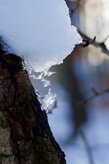 Rester de glace (cécilelamoureux) Tags: nature neige snow froid cold macro hiver winter canon glace ice