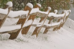 The Winter Fence (Irene, W. Van. BC) Tags: thewinterfence fence fences snow snowscenes snowstorm snowcoveredfence allfences woodenfence winter winterscenes trees treesilhouettes treebranches treesinsnow shrubs shrubbery outdoors outdoorscenes 1001nights 1001nightsmagiccity 1001nightsmagicwindow grass