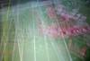 Alabama vs. Georgia (ricko) Tags: tv footballgame nationalchampionship blur alabama crimsontide georgia bulldogs werehere 8365 2018 field