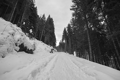 (Pentastar In The Style Of Demons) Tags: canon 5dmk2 samyang samyang14mm fisheye nature mountain forest snow cold winter landscape path