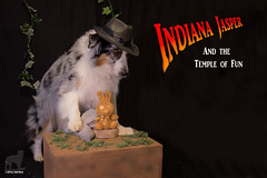 3/52 Indiana Jasper and the Temple of Fun (Jasper's Human) Tags: 52weeksfordogs 52wfd aussie australianshepherd indianajones raidersofthelostark templeofdoom