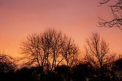 Sunrise II - over Rutland Water Reservoir (UK) (JerryGoulet) Tags: sunrise dusk nikon d7100 rutlandwaterreservoir england uk nature naturereserve colours goldenhours landscape wilderness wild outdoors trees foliage