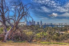 Skyline with Dead Tree (Michael F. Nyiri) Tags: elysianpark losangeles skyline cityscape city california southerncalifornia urban park
