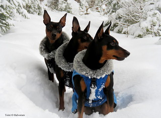 My three cute snowdogs