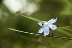 LA VIDA EN INKILLATAMBO -  CUSCO (diazeg) Tags: avispa verde azul amarillo flor planta vegetacion animal insecto