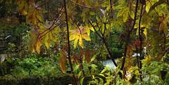 Diálogos de la naturaleza (desde mi corazón) Tags: ramas hojas parque naturaleza