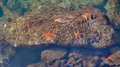 starfish (heinz41) Tags: epl7 olympus lumix35100mmf456 panasonic starfish winter coalharbour vancouver