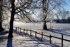 Snow and sun (Tobi_2008) Tags: winter schnee snow sonnig sunny bäume trees landschaft landscape sachsen saxony deutschland germany allemagne germania zaun fence
