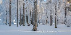 Frost at Väinölänniemi (JP Korpi-Vartiainen) Tags: 21c finland jpkorpivartiainen©2015 january arctic arktinen asuminen aurinkoinen building cold frost frosty house huurre huurteinen huurteiset katu kaupunki koti kylmä landscape living lumi maisema omakoti omakotialue omakotitalo pakkanen park puisto puut rakennus scenery snow street sunny talo talvi talvinen tammikuu tree trees winter wintry