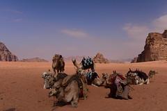 Wadi Rum Desert, Jordan, January 2018 860 (tango-) Tags: giordania jordan middleeast mediooriente الأردن jordanien 約旦 ヨルダン desert wadirum