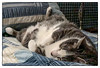 Complete Relaxation (Timothy Valentine) Tags: 2018 quinnomannion cat home 0118 bed eastbridgewater massachusetts unitedstates us