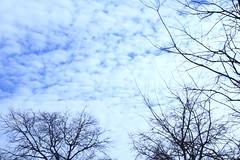 Día 217 (acido askorbiko) Tags: ramas branches arboles trees cielo sky blue beauty nature spongy winter landscape picture portrait canon photo photography photographer noedit nofilters shoot shooting