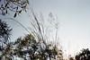 Elegance (0zufan) Tags: contax contaxg1 g1 45mmf2 planar zeiss fujifilm pro400h sydney sky tree