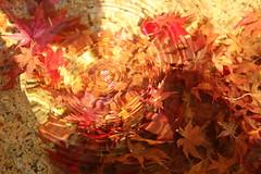 IMG_2925 (jumppoint5) Tags: ripples autumn colours leaves hiroshima miyajima japan water creative light shadow