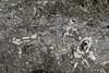 rocky details (cyberjani) Tags: adriatic sea istria beach fossil