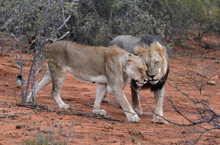 les amoureux!!the lovers South Africa _4021