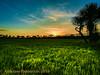 First the sun goes down, then the night falls over the Savanah. Thats  the AMAZON life. (anastase.papoortzis) Tags: dusk sunset amazonian amazon green tree gold golden yellow blue savanas savanah roraima brazil