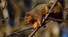 SycamoreGrovePark_022518_007 (kwongphotography) Tags: livermore ca calif wildlife wildlifephotography nature naturephotography livermorearearegionalparkdistrict sycamoregrovepark unitedstates