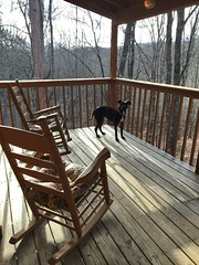 Fiona at Tree House (CRomannBayer) Tags: rockingchair porch tennessee cabin dog