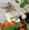 Surprise (Ellsasha) Tags: cats felines white surprise startling