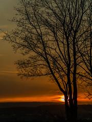 Sonnenaufgang  - sunrise (achim-51) Tags: sonnenaufgang sunrise himmel baum panasonic dmcg5 lumix natur