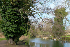 Riverside Walk by the River Brett (ho_hokus) Tags: 2018 england fujix20 fujifilmx20 hadleigh riverbrett riversidewalk suffolk swan river landscape tree sky swans