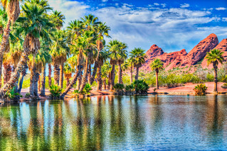 Palm Trees Hanging over the Edge of a Desert Pond Near Papago Park