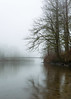Connections (John Westrock) Tags: nature bridge trees fog foggy carnation washingtonstate pacificnorthwest canoneos5dmarkiii sigma35mmf14dghsmart
