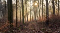 Mystical light (Sebo23) Tags: light lightbeam sunstar sonnenstrahlen sonne sonnenstern wald forest gegenlicht lichtstimmung naturaufnahme nature natur landscape landschaft autumn canon6d canon16354l