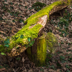 The old wooden bench (redfurwolf) Tags: bench moss wood forest outdoor nature old rotten outdoors redfurwolf sonyalpha a99ii sony sal2470f28za
