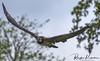 Wildlife in England (rvk82) Tags: 2017 birds england may may2017 nikkor70200mm nikon nikond810 rvk rvkphotography raghukumar raghukumarphotography warwick warwickshire wildlife rvkonlinecom rvkphotographycom unitedkingdom gb