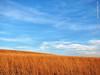 Konza Prairie, 10 Feb 2017 (photography.by.ROEVER) Tags: kansas rileycounty prairie tallgrassprairie konzaprairie nature naturetrail flinthills bluesky blueskies grasslands landscape afternoon february 2017 february2017 trip roadtrip usa